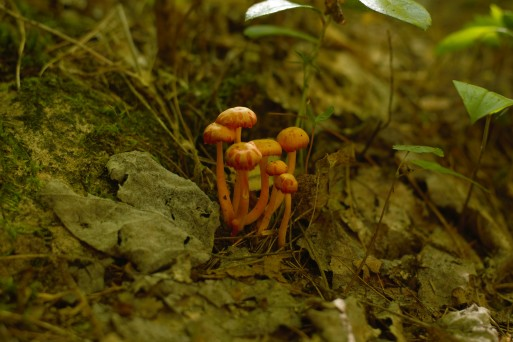 """I believe I told Aiko that these were """"cutie patootie mushrooms"""""""