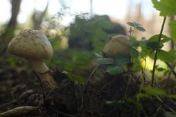 Another fairy garden!